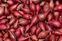 Czerwonej cebuli ziarno Obraz Royalty Free