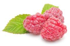 Czerwonej malinki owoc Zdjęcie Royalty Free