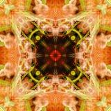 Czerwonej pandy abstrakt 2 Fotografia Stock