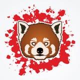 Czerwonej pandy twarzy głowa Obraz Stock