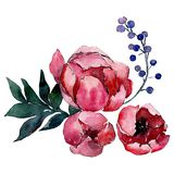 Czerwonej peoni botaniczni kwiaty Odosobniony bukiet ilustracji element zielony liść tła bazy projekta ustalona akwarela royalty ilustracja