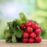 Czerwonej rzodkwi warzywa w lecie Zdjęcia Royalty Free