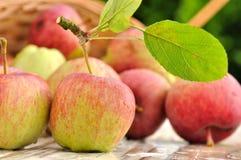 Czerwoni świeżość jabłka Obraz Stock