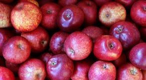 Czerwoni świezi organicznie jabłka Obraz Royalty Free