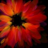 czerwoni abstrakcjonistyczni płatki Zdjęcia Royalty Free