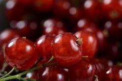Czerwoni agresty kosze, owoc tło obraz stock