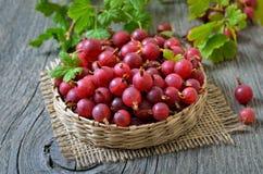 Czerwoni agresty w łozinowym koszu Zdjęcie Stock