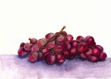 Czerwoni akwareli winogrona Zdjęcie Stock