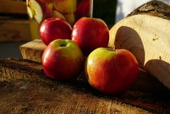 Czerwoni Amasya jabłka Turcja i pożarniczy drewna zdjęcie stock