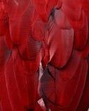 Czerwoni ar piórka Zdjęcie Royalty Free