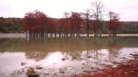 Czerwoni bagno cyprysy i jezioro, jesieni tło chmurny dzień zbiory