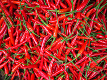 Czerwoni chillies dla sprzedaży przy rynkiem Zdjęcie Stock