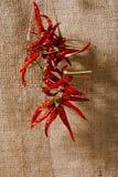 Czerwoni chillies wiążący linowym hessian backround Fotografia Stock