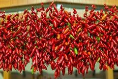 Czerwoni chillies wieszający suszyć Obraz Stock