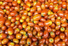 Czerwoni czereśniowi pomidory Obraz Royalty Free