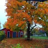 Czerwoni drewniani domowi szwedzi Obraz Royalty Free