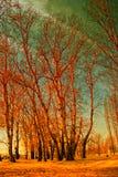 czerwoni drzewa Zdjęcie Royalty Free