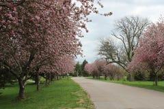 Czerwoni drzewa w oba strona droga Fotografia Royalty Free