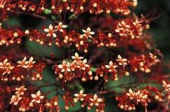 Czerwoni dzicy kwiaty w Trinidad lesie tropikalnym obrazy stock