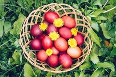 Czerwoni Easter jajka na trawie z kwiatami i blowballs naturalnymi, Zdjęcia Stock