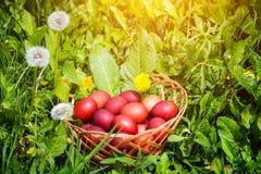 Czerwoni Easter jajka na trawie z kwiatami i blowballs naturalnymi, Obraz Stock