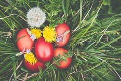 Czerwoni Easter jajka na trawie z kwiatami i blowballs naturalnymi, Zdjęcia Royalty Free