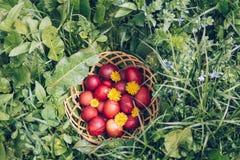 Czerwoni Easter jajka na trawie z kwiatami i blowballs, wiosna Obrazy Royalty Free