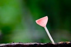 czerwoni filiżanka grzyby Fotografia Stock