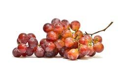 czerwoni gałęziaści świezi winogrona Fotografia Stock