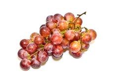 czerwoni gałęziaści świezi winogrona Obrazy Stock