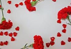 Czerwoni goździki na białym tle Obrazy Stock