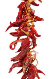 czerwoni gorący chili pieprze Obrazy Royalty Free