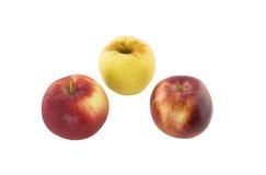 Czerwoni i żółci jabłka Obraz Stock