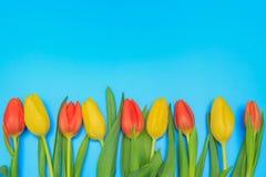Czerwoni i żółci tulipany na błękitnym pastelowym tle Zdjęcie Royalty Free