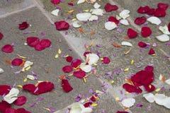 Czerwoni i biali płatki na flloor obraz royalty free