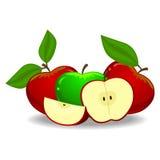 Czerwoni Jabłczani i Zieleni jabłka royalty ilustracja