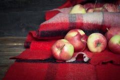 Czerwoni jabłka na szkockiej kracie Zdjęcia Royalty Free