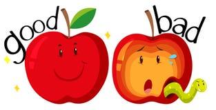 Czerwoni jabłka w dobrym i złym stanie Zdjęcie Royalty Free