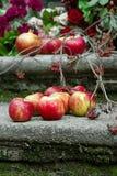 Czerwoni jabłka i rowanberry Zdjęcie Stock