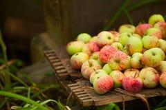 Czerwoni jabłka na stole Obraz Stock
