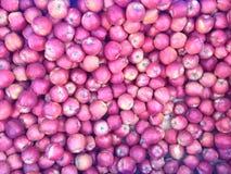 Czerwoni jabłka w wielkim zbiorniku Obrazy Royalty Free