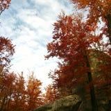 Czerwoni jesieni drzewa Zdjęcie Royalty Free
