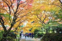 Czerwoni klonowi drzewa w japończyka ogródzie Obrazy Royalty Free
