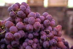 czerwoni kul ziemskich winogrona Zdjęcie Stock