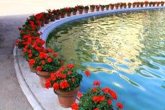 czerwoni kwiatów garnki Zdjęcia Stock
