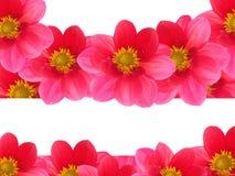 czerwoni kwiatów płatki Fotografia Royalty Free