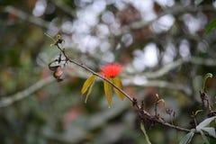 Czerwoni kwiatów słupkowie cienieją gałąź z żółtymi liśćmi Obraz Stock