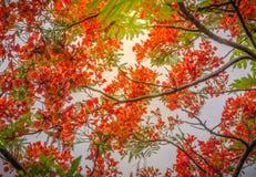 Czerwoni kwiatu i zieleni liście na świetle słonecznym Obraz Stock