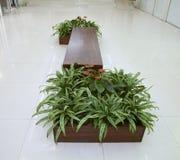 Czerwoni kwiaty Anthurium i liście rośliny dieffenbachia Zdjęcie Stock