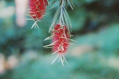 Czerwoni kwiaty butelki muśnięcia drzewo zdjęcia royalty free
